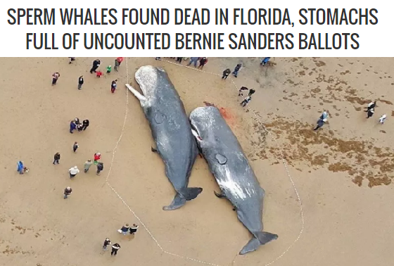 SPERM WHALES FOUND DEAD IN FLORIDA, STOMACHS FULL OF UNCOUNTED BERNIE SANDERS BALLOTS, Donald Trump worst things he has to say about mexicans, top 5 terrible things donald trump has said, best quotes of all time, marine biology, satire, best funniest hilarious satire, misha estrin comedy, mishaestrin.com, florida,
